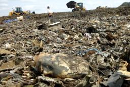 大量消費は大量廃棄