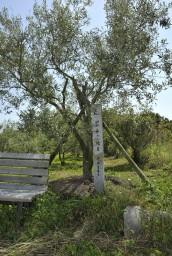 記念のオリーブの植樹